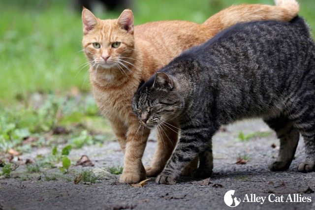 two ferals